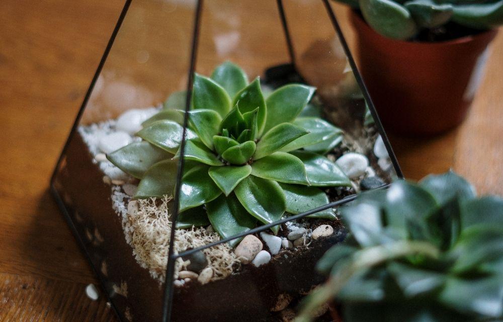 best plants for closed terrarium