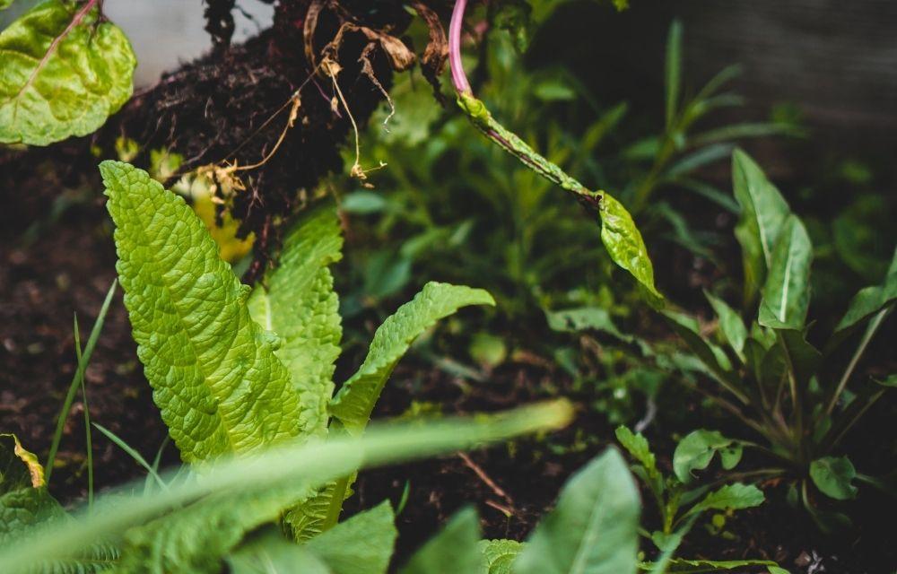best potting soil for vegetables