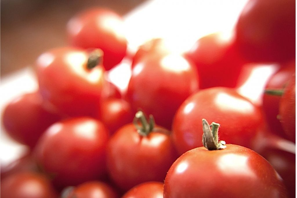 white spots on tomato leaves