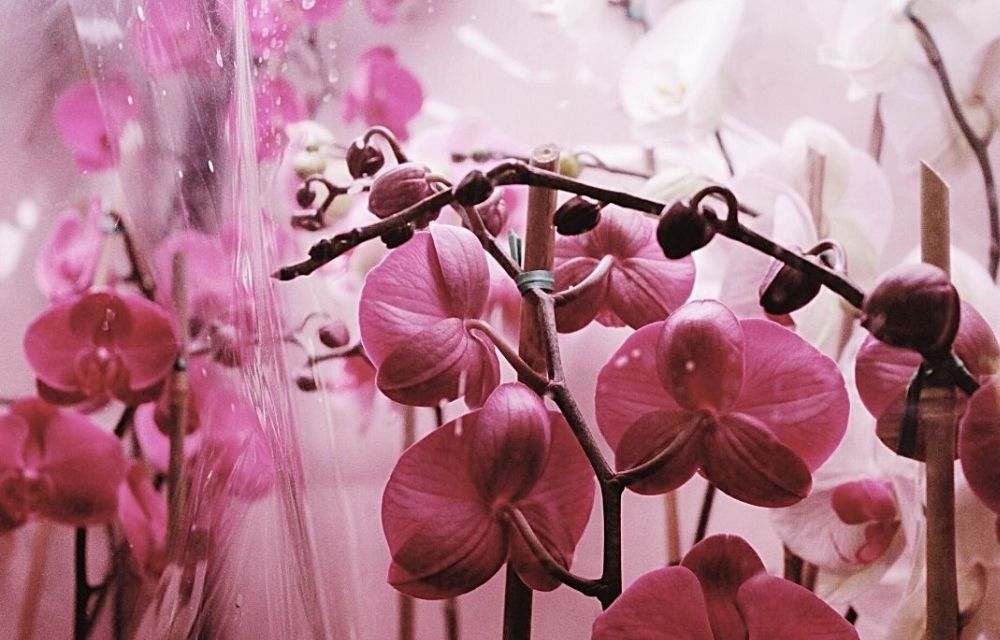 best place to buy orchids online