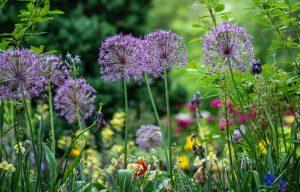 plants that repel flies