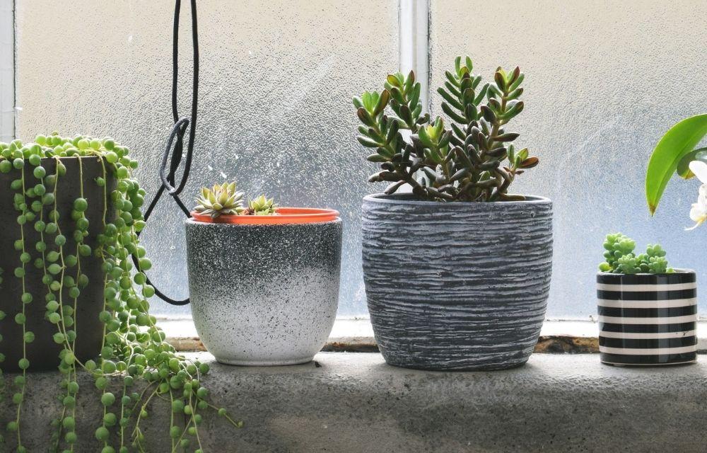 North Facing Window Plants