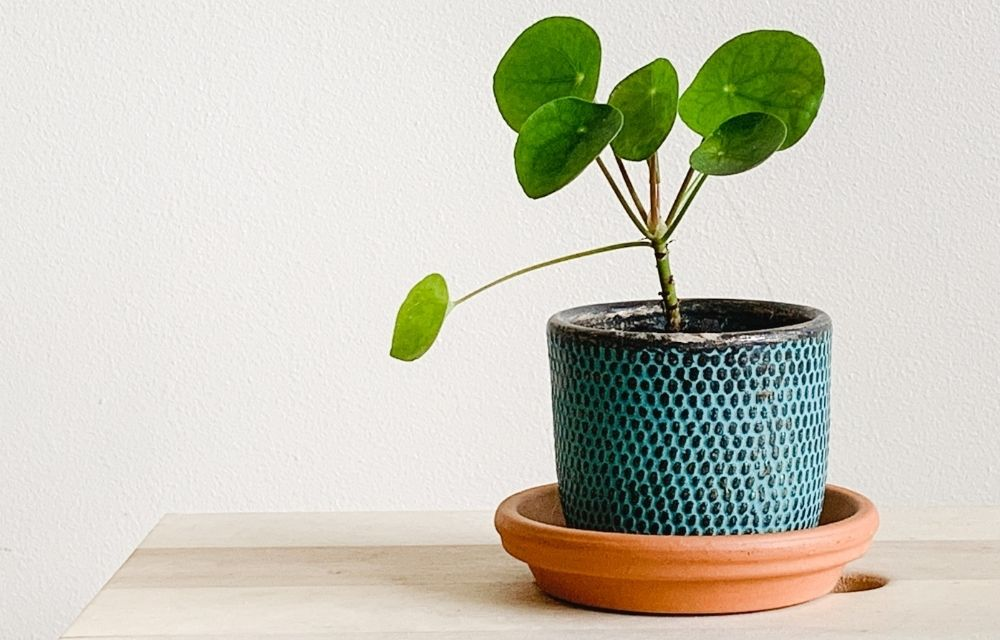 best plants for kokedama